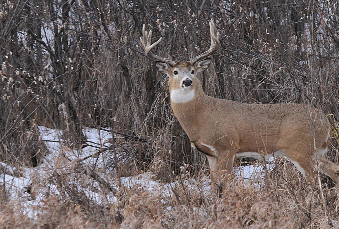 Top 5 Reasons to Hunt Whitetail in SK - Featured Image