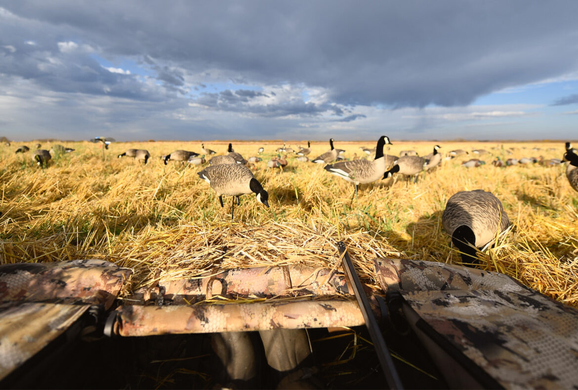 What to expect on a Saskatchewan Waterfowl Hunt - Featured Image